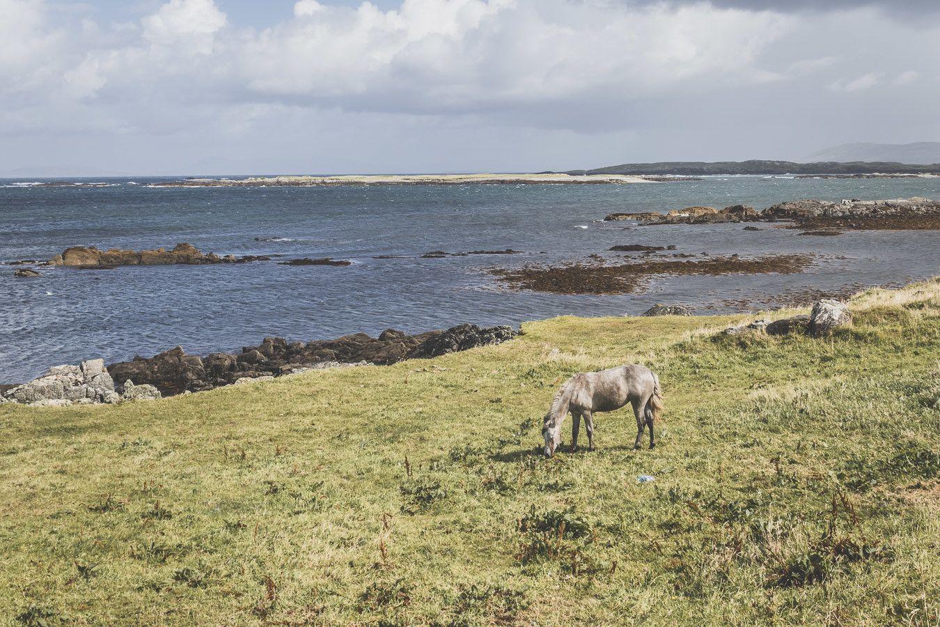 road trip irlande - chevaux