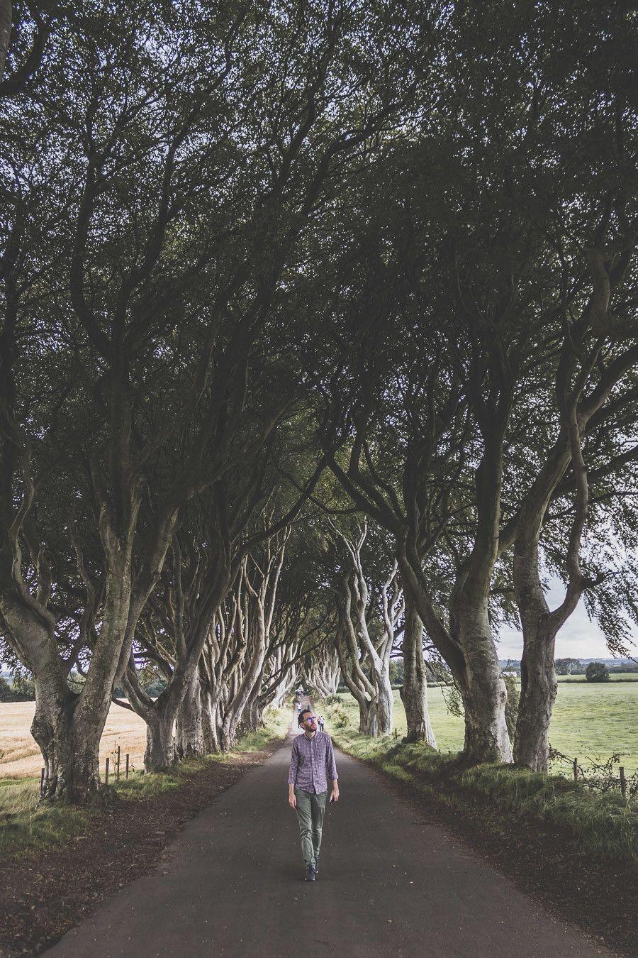 dark hdges - vieux arbres en irlande du nord