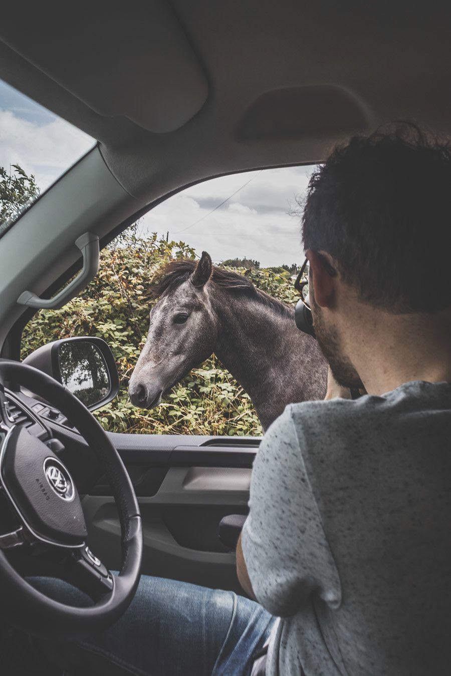 photo cheval road trip irlande