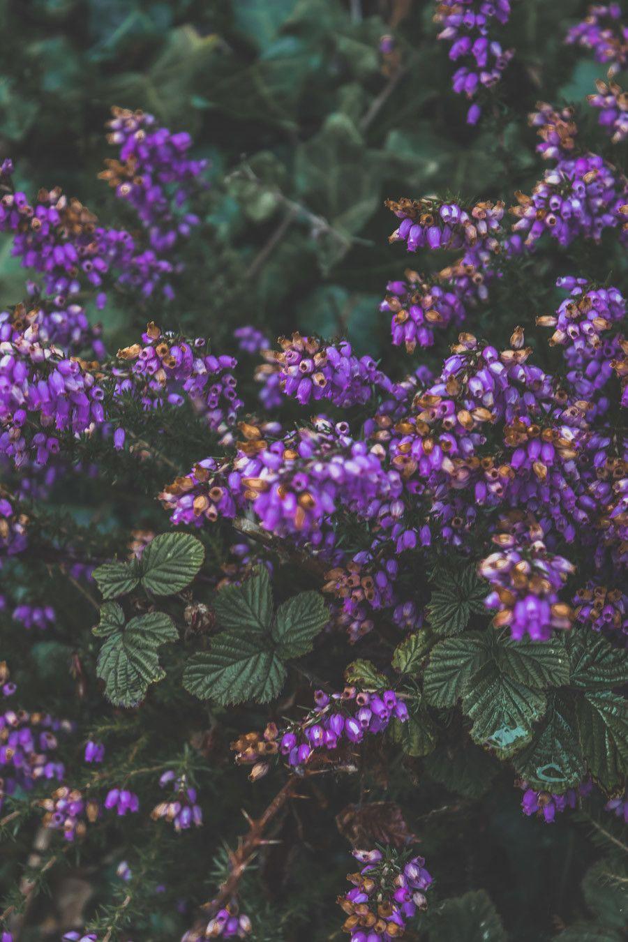 Détails fleuris en Irlande