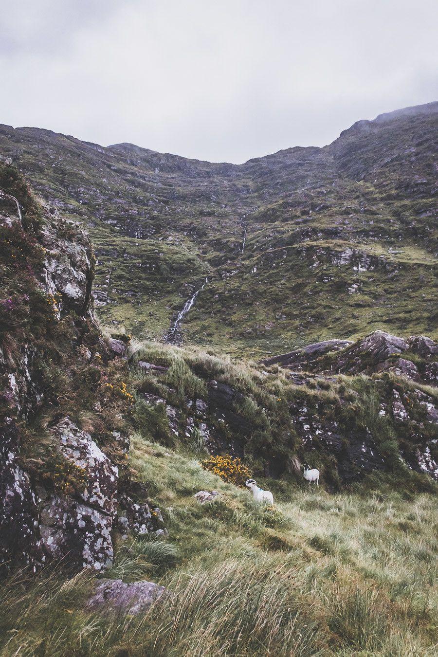 Road trip en Irlande, vue depuis la route sur le Ballaghbeama Gap