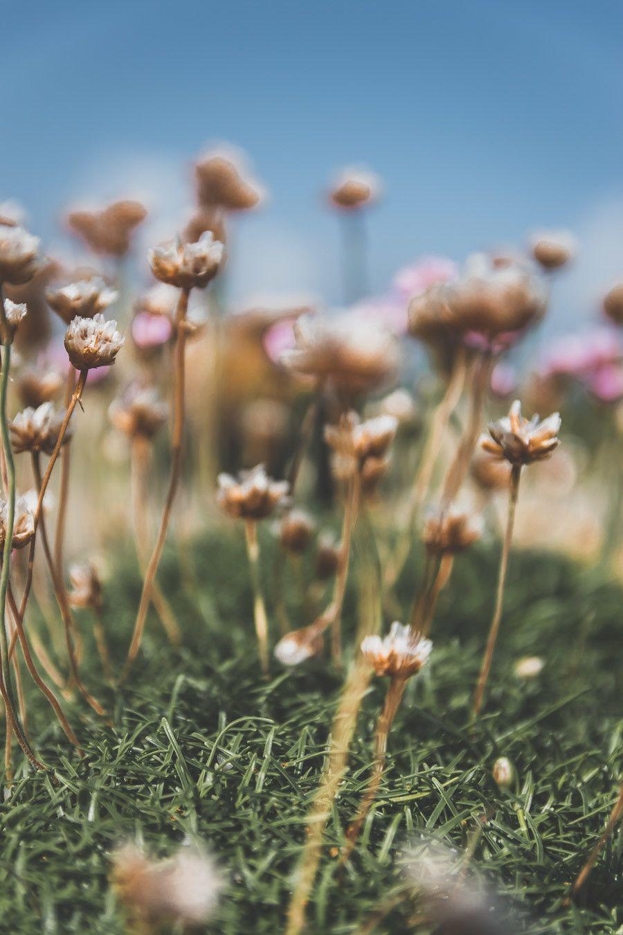 Les fleurs des champs du comté de Mayo