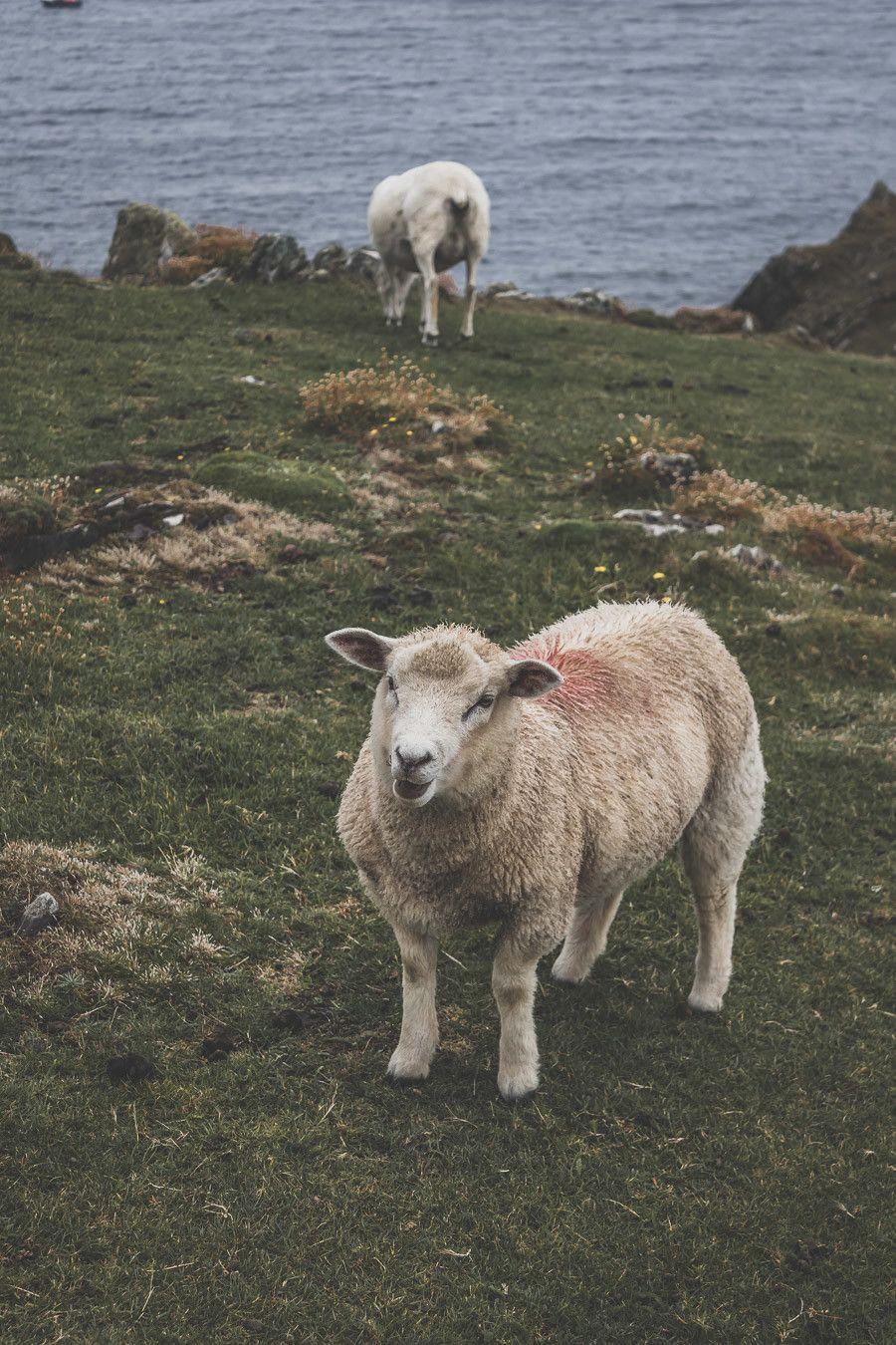 Blog voyage sur le comté de Kerry en Irlande