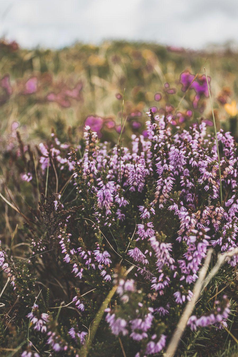 Ireland flowers