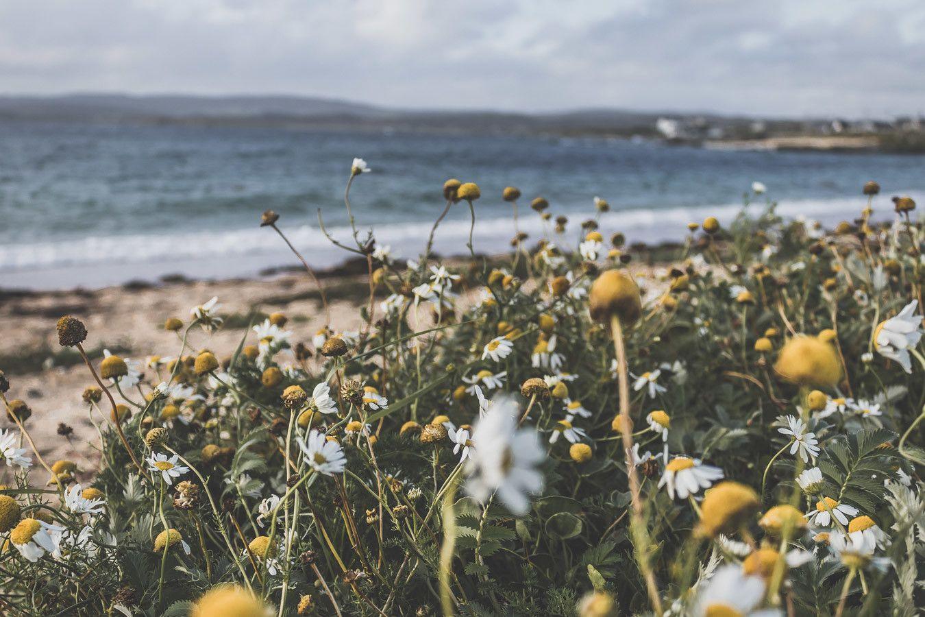 Fleurs, plages et mer à perte de vue