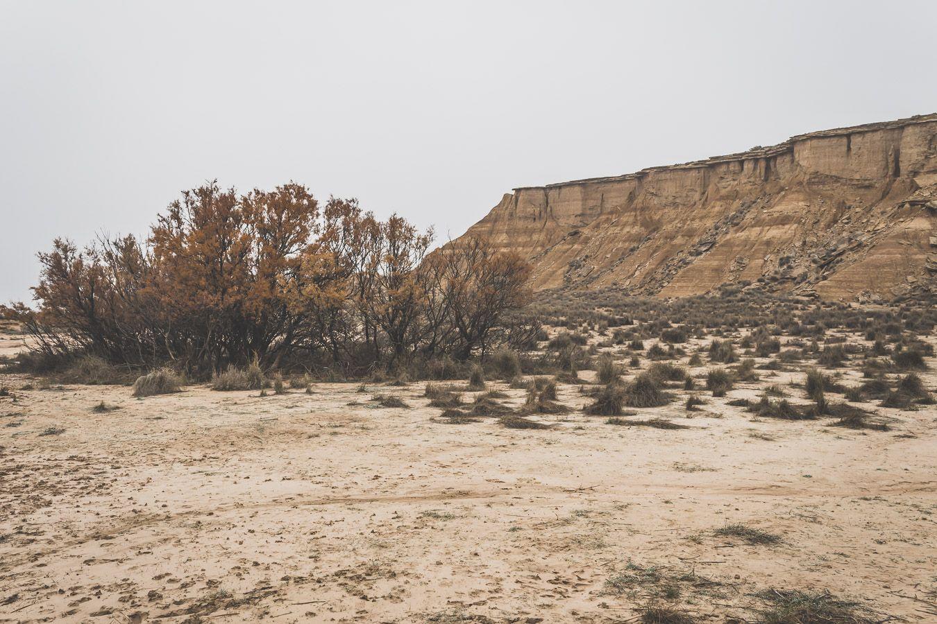 la nature au coeur du désert