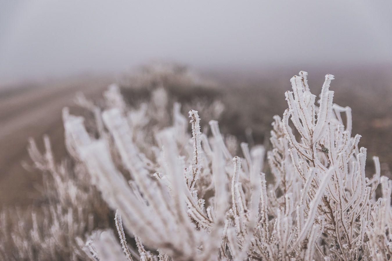 Plantes avec du gel