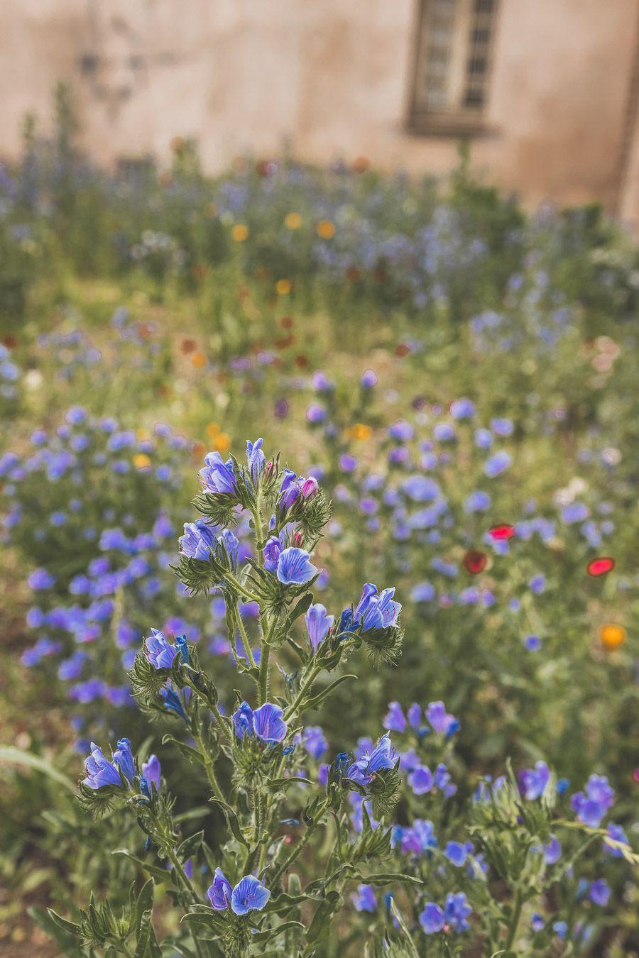 Fleurs d'Albi