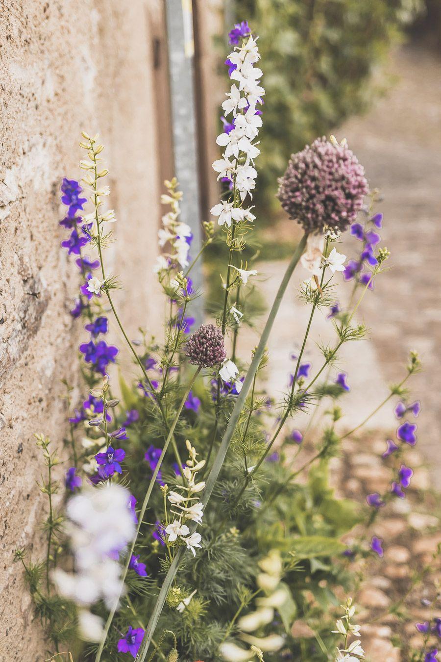 Plantes à Cordes-sur-Ciel