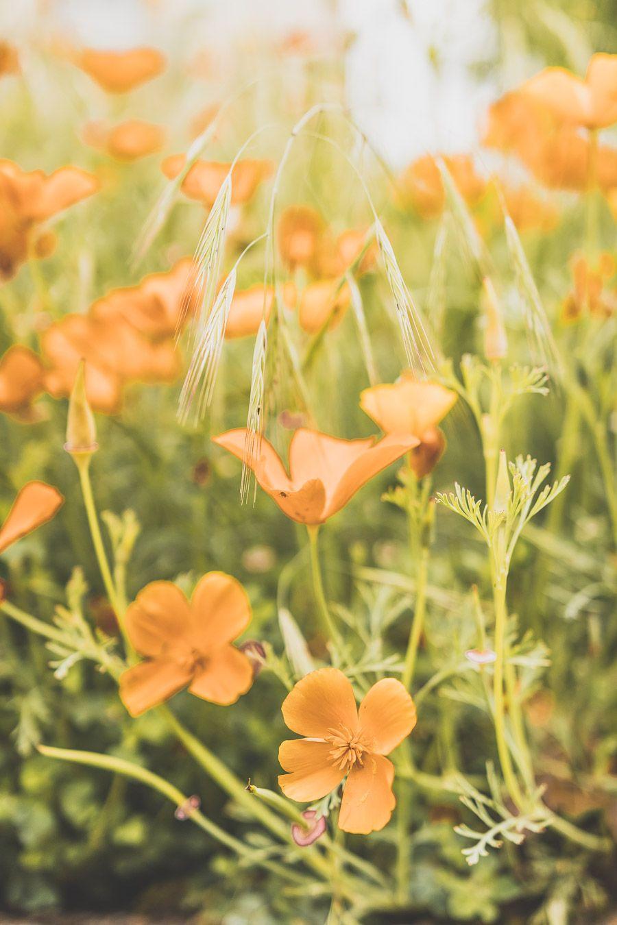 Fleurs à Monestiès