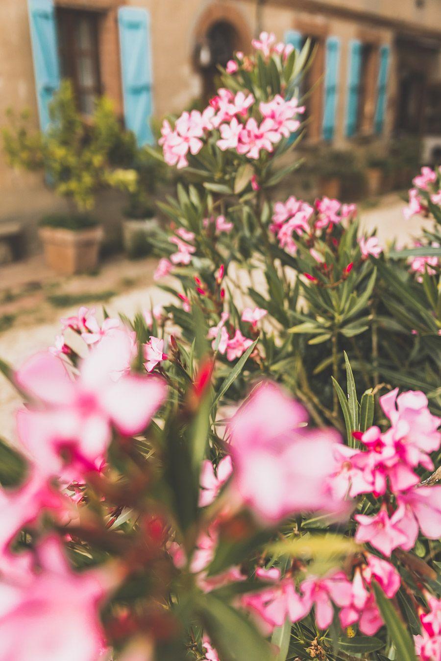 Fleurs du Gers