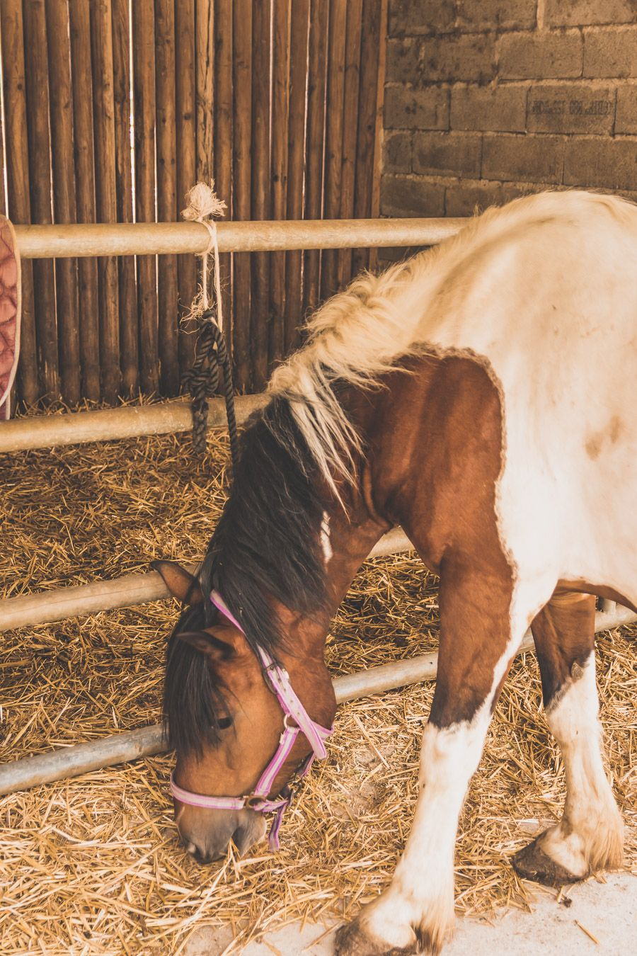 Poney Club La Bascoulette l'Isle-Jourdain - sortie à cheval dans le Gers