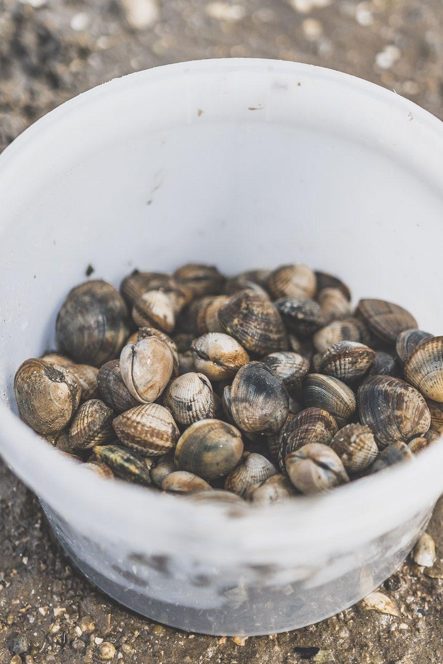 Coquillages en Bretagne