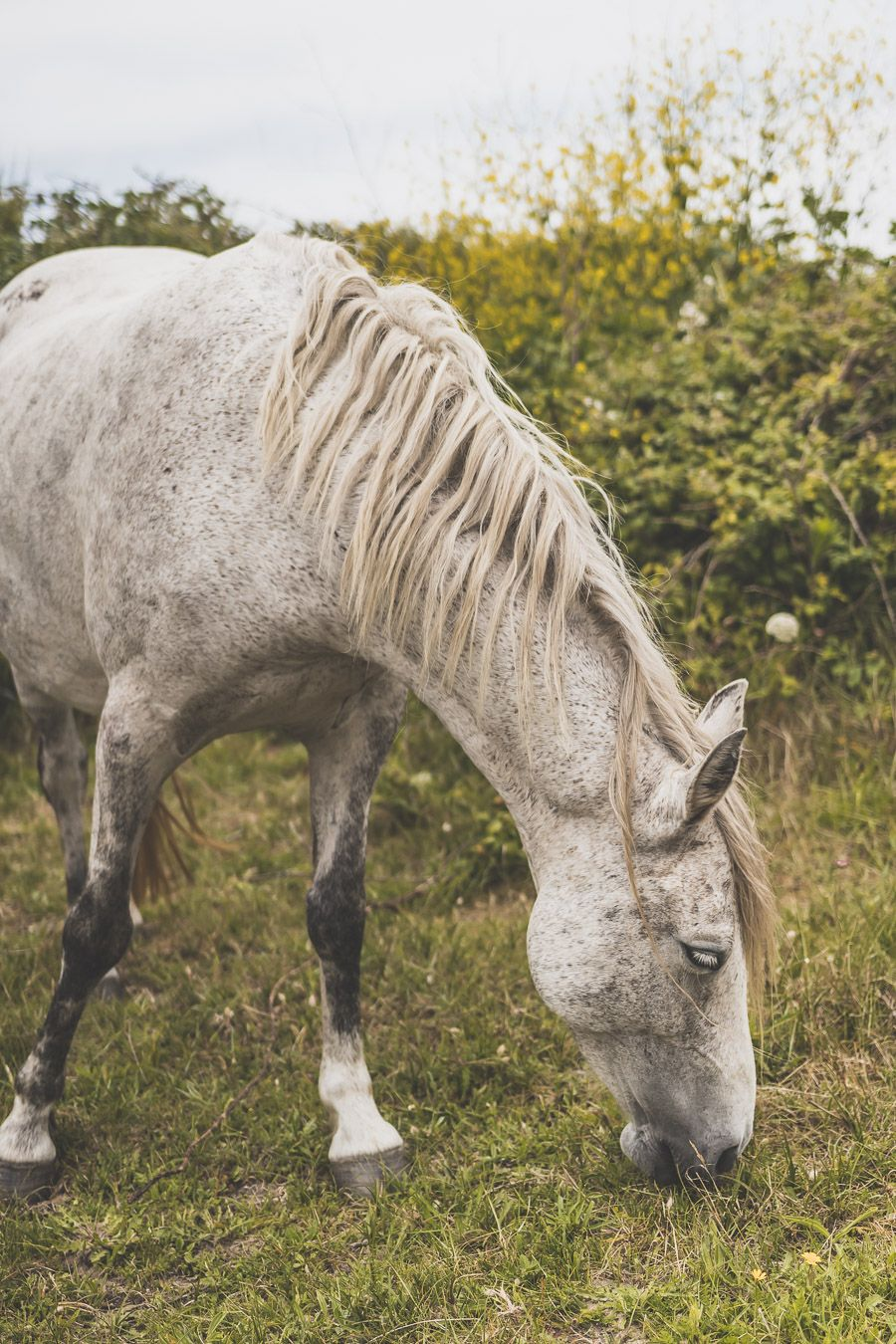Cheval en Bretagne