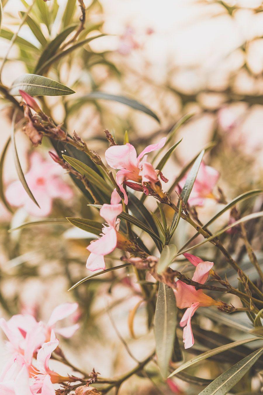 Fleur à Saint-Clar