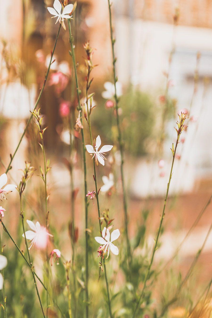 Fleur du Gers