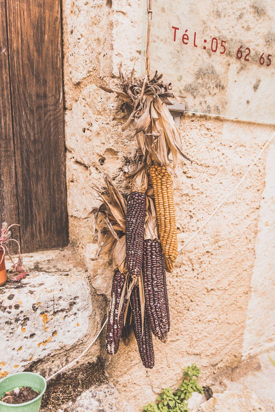 Maïs suspendu dans le Gers