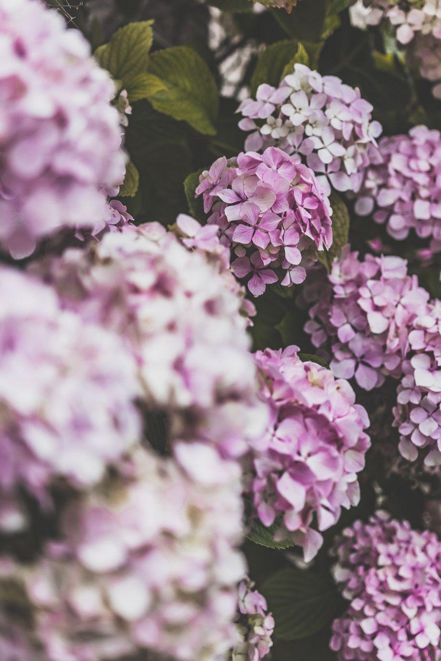 Fleurs à Pléneuf-Val-André