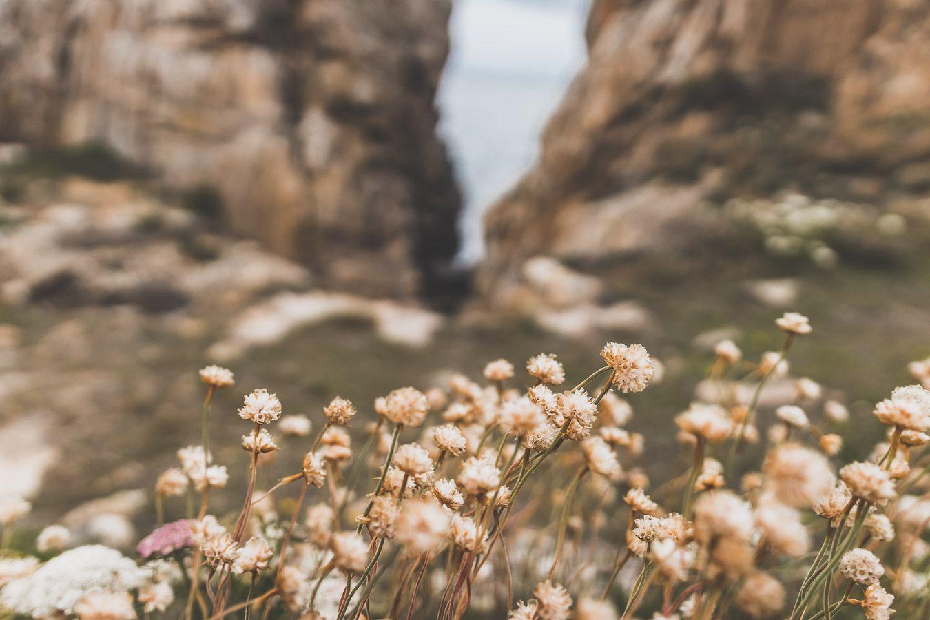 Fleurs sur la côte bretonne