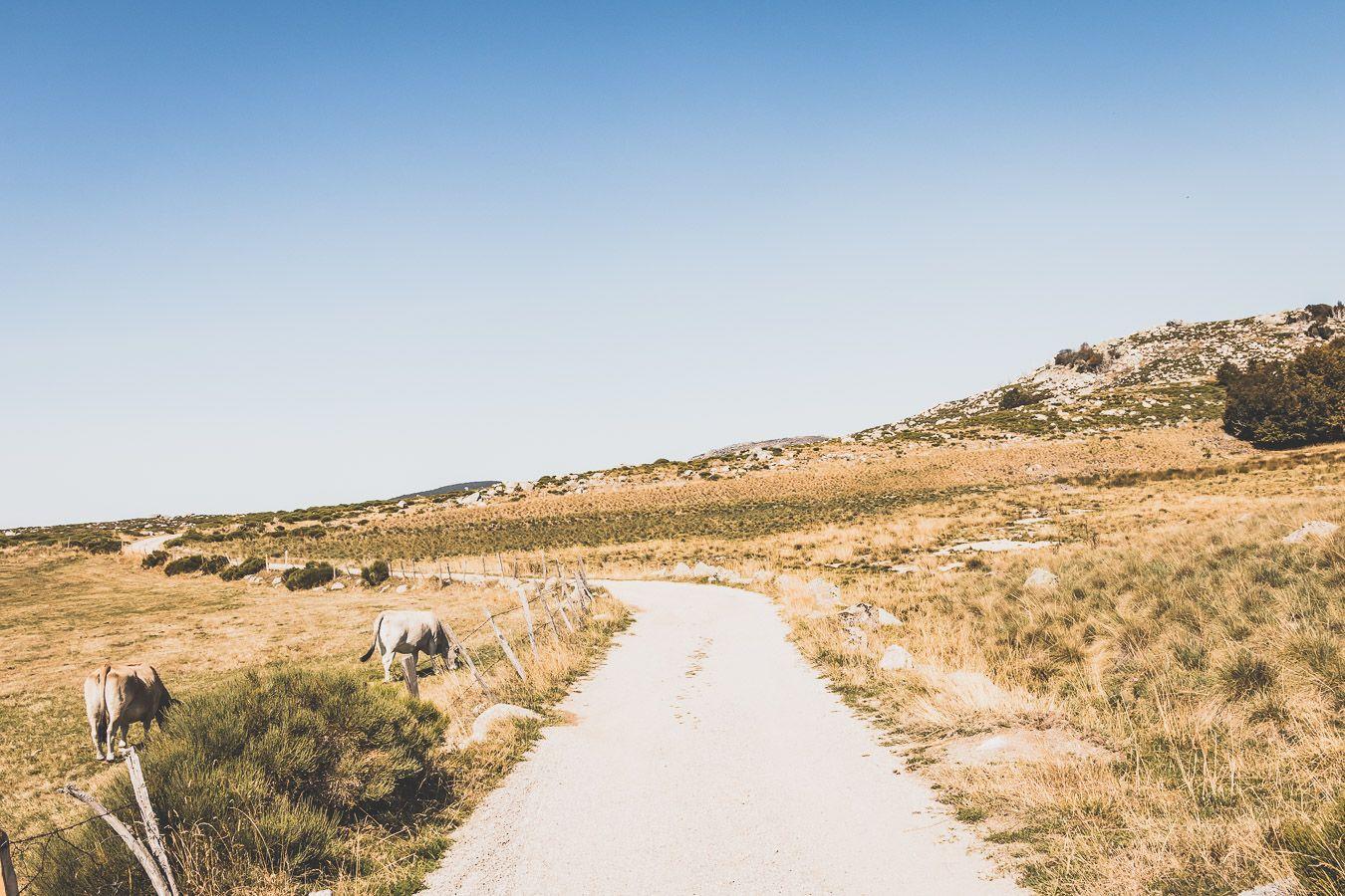 piste du Mont Lozère