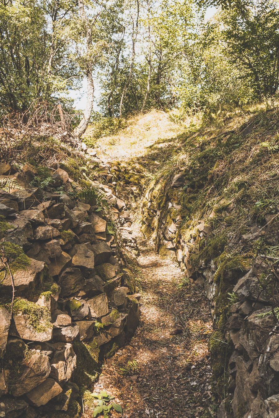 Vieil Armand dans les Vosges